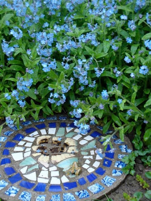 Stepping Stone and Forget Me Nots