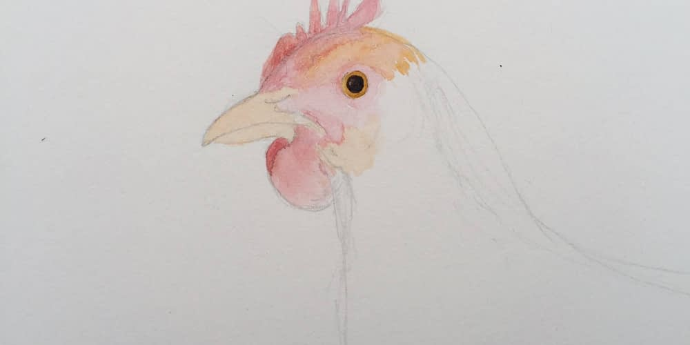 Chicken Painting In Progress